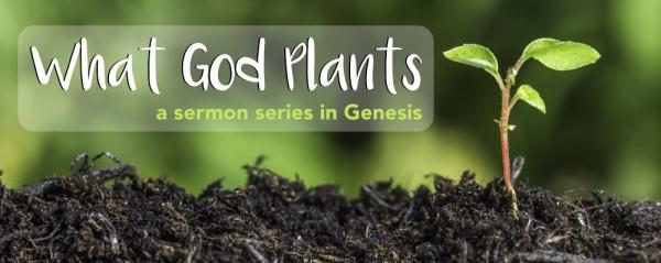 Trey Richardson - The Seed Of Renewal - Genesis 8:20-9:17 Image